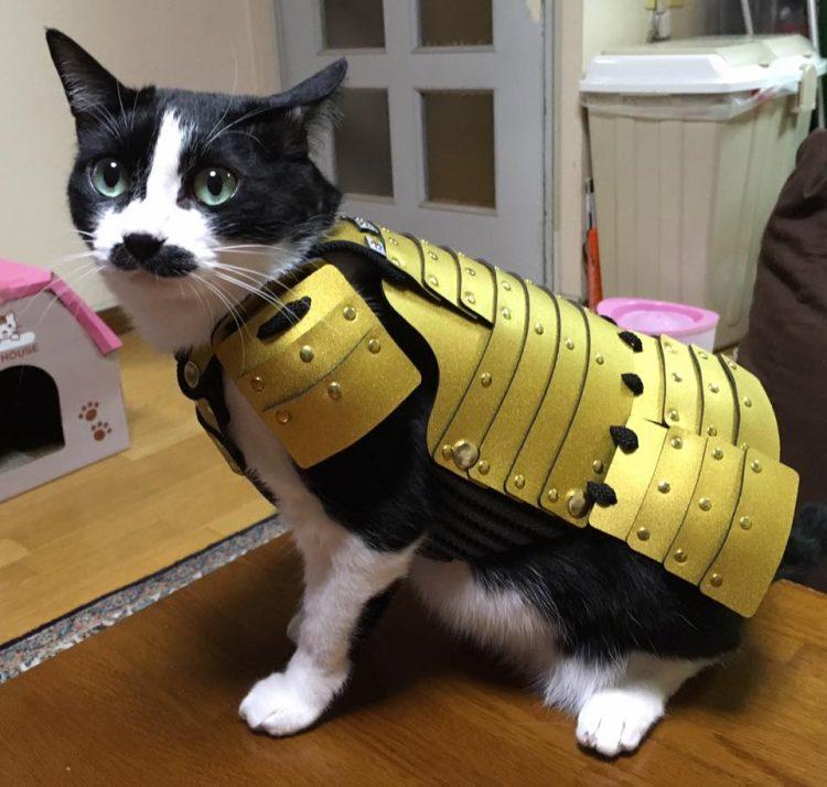 Samurai-armor-for-pets5-750x714.jpg